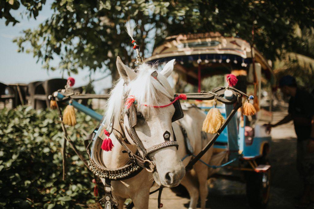 Cidomo Horse Cart